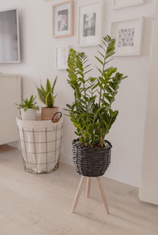 pianta verde arredamento vaso vimini