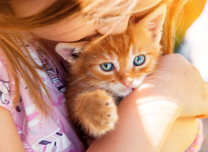 bambina con capelli rossi tiene gattino micio gatto rosso occhi azzurri