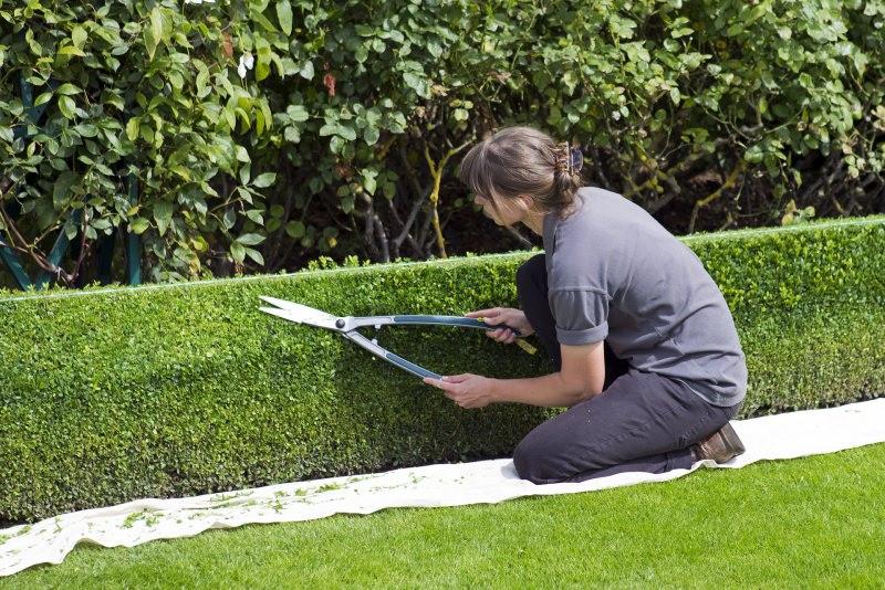 Come trovare un giardiniere perfetto per il tuo giardino potare siepi topiaria donna