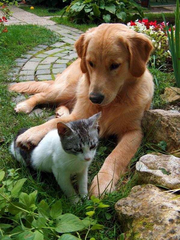 protezione animali cane gatto fresco giardino ondata di calore fiori