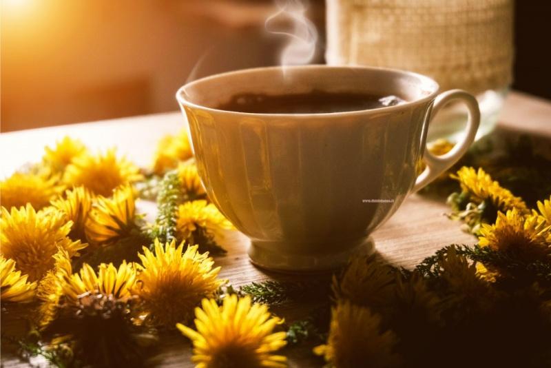 dandelion coffee caffè di tarassaco tazzina fiori sole