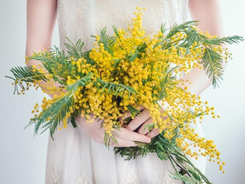 bouquet di mimose tra le mani donna 8 marzo