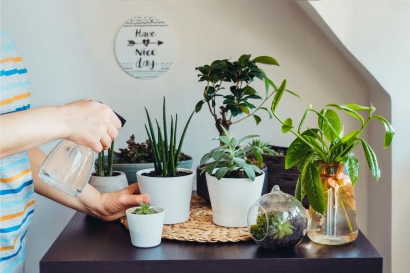 prendersi cura delle piante casa angolo verde