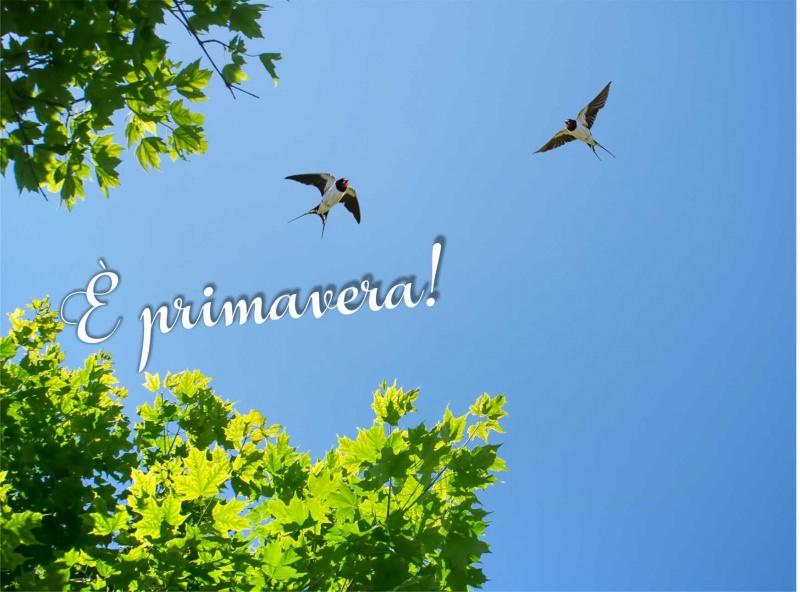 è primavera rondini cielo foglie albero sole
