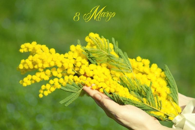 mimose fiori 8 marzo