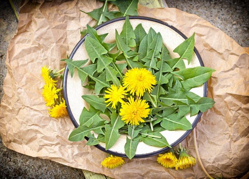 piatto con fiori e foglie di tarassaco