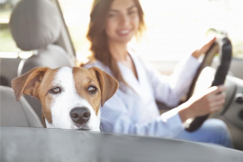 ondata di calore cane in auto protezione donna sorridente al volante