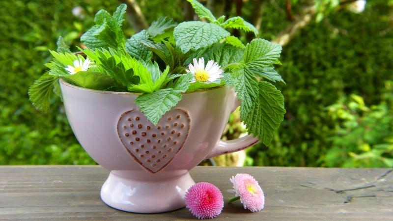 tazza erbe fiori detox tea