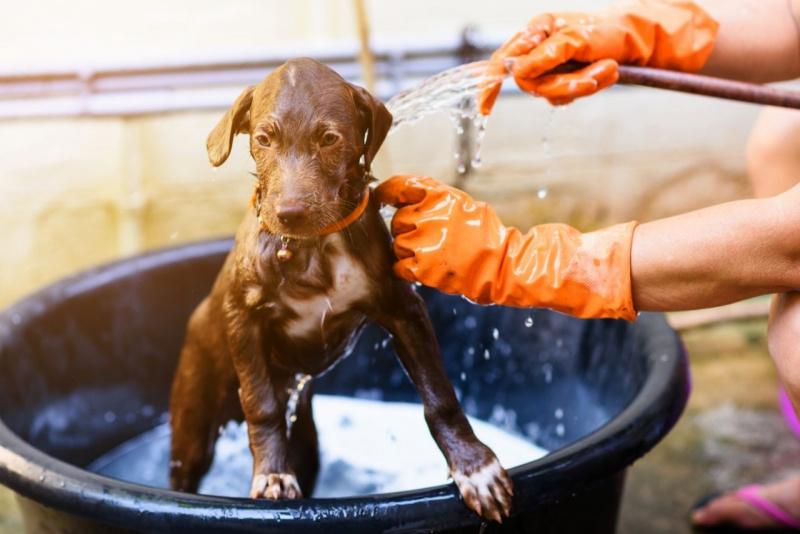 ondata di calore tubo acqua rinfresca cane protezione idratazione cucciolo