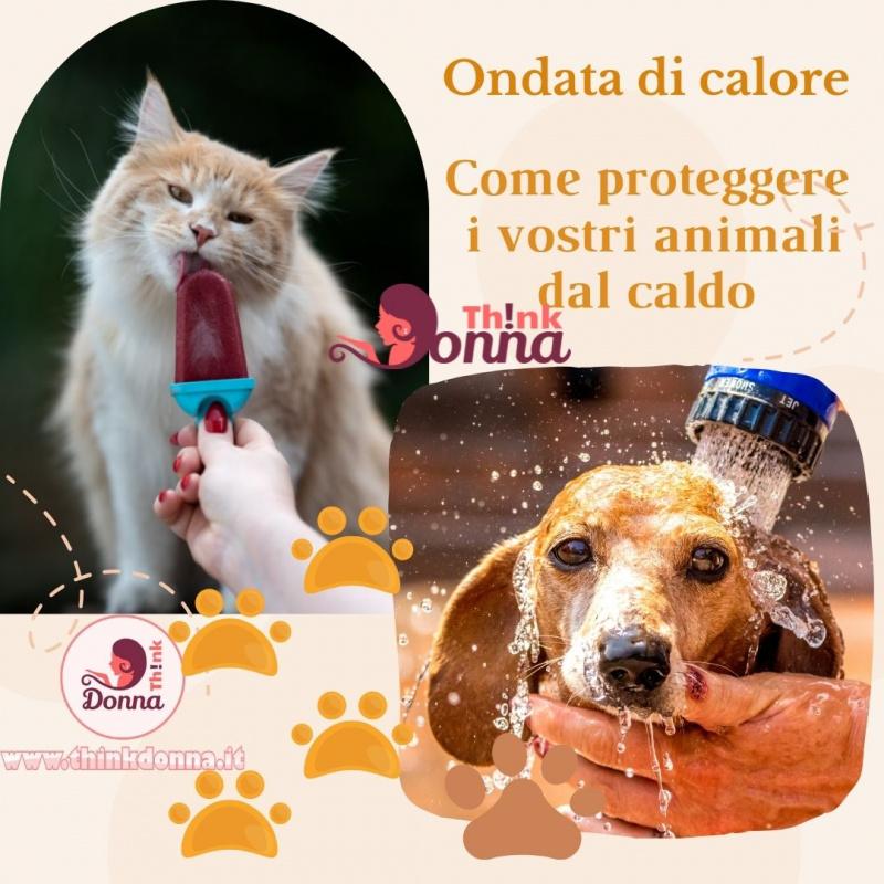 gatto lecca ghiacciolo doccia su cane ondata di calore protezione animali