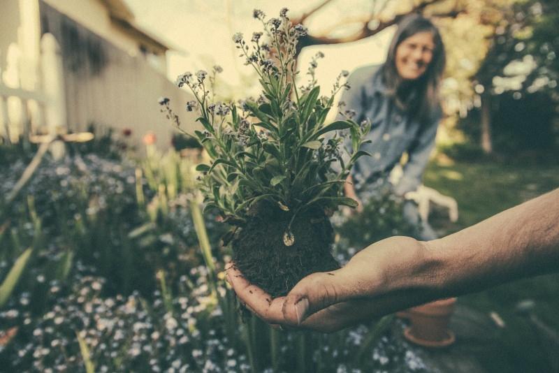 Come trovare un giardiniere perfetto per il tuo giardino piantare pianta salvia fiori terra