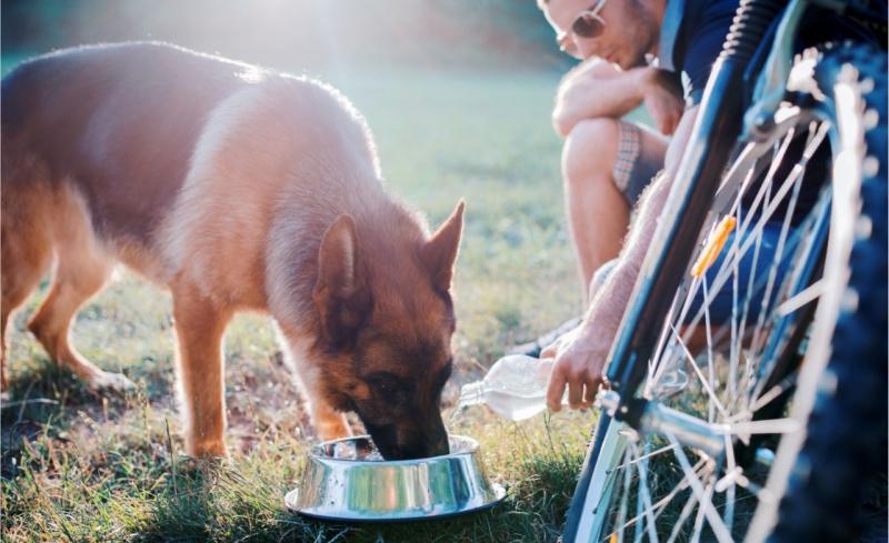 idratazione protezione animali cane sete ondata di calore