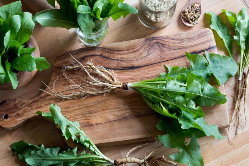 radici di tarassaco su tavolo legno