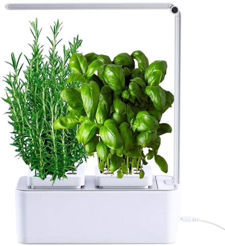 serra idroponica per piante della Vaso Smart erbe aromatiche rosmarino basilico
