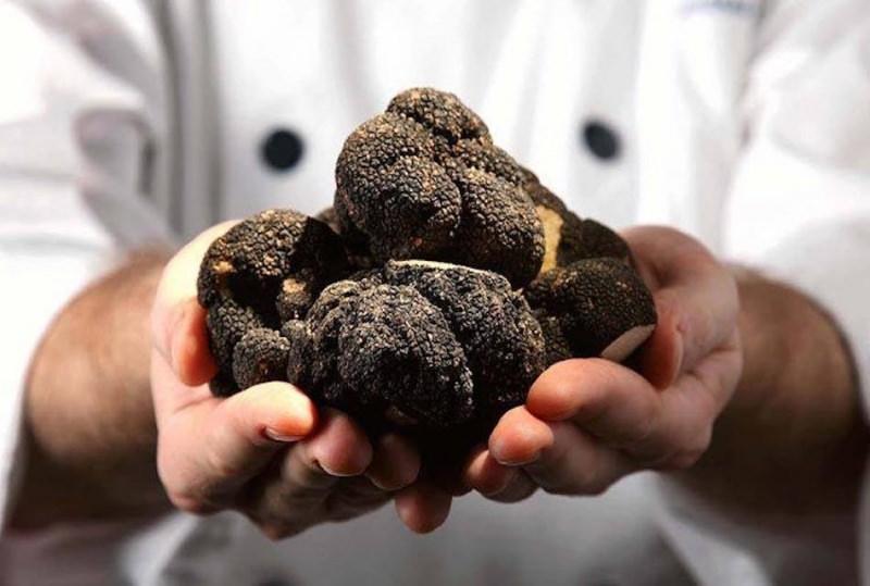 I migliori abbinamenti tra vino e tartufo mani uomo chef tartufi neri