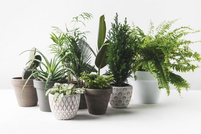 angolo verde piante da appartamento