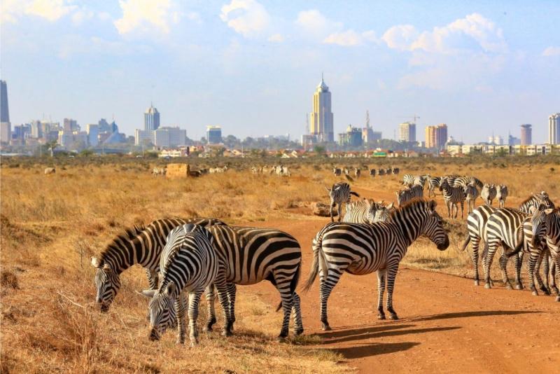Nairobi zebre Kenya